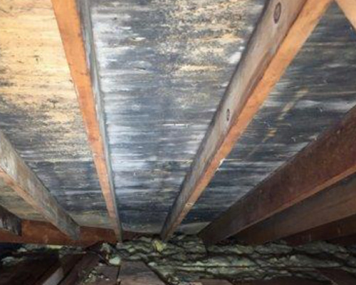 Black Mold In Attic