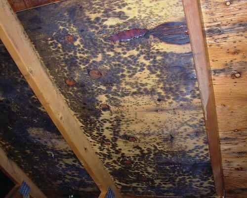 Moldy Roof Interior